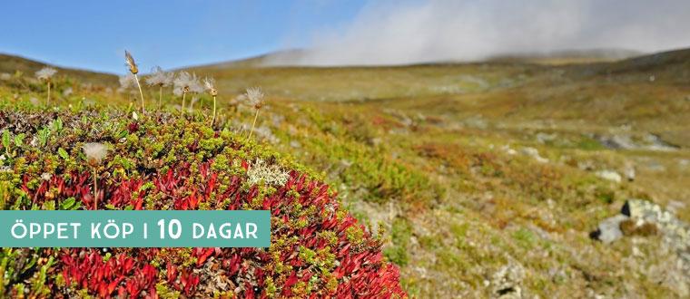 Inlandsbanan med Höga kusten och Lappland